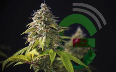 Hablemos de cannabis